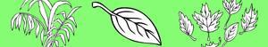 Coloriages Plantes et Feuilles à colorier